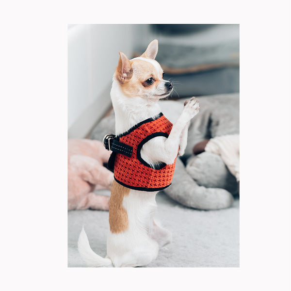 Soho Dog Harness - Jolly and Bea's - 4