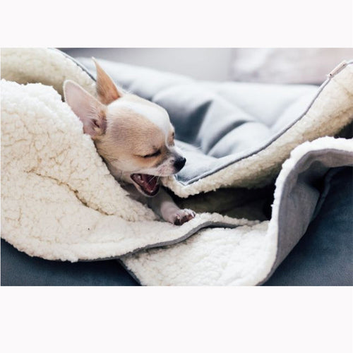Dreamy Silver Dog Blanket - Jolly and Bea's - 2