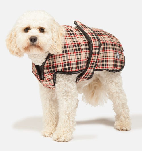 Luxury Dog Jacket