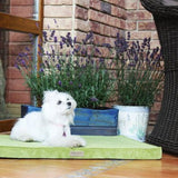 Olive Dog Mat - Jolly and Bea's - 3