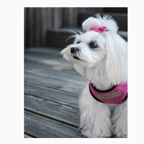 Pink Candy Dog Harness - Jolly and Bea's - 2