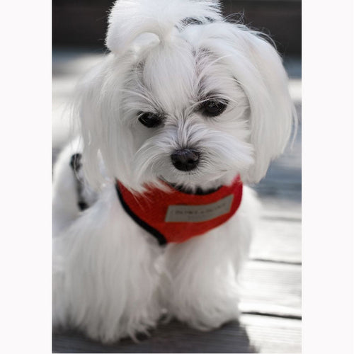 Red Candy Dog Harness - Jolly and Bea's - 2