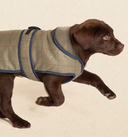 Tweed Dog Coat - Jolly and Bea's - 2