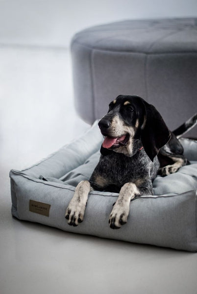 Urban Grey Dog Bed - Jolly and Bea's - 4