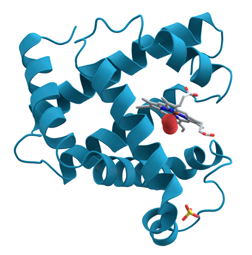 Total LDH Enzyme