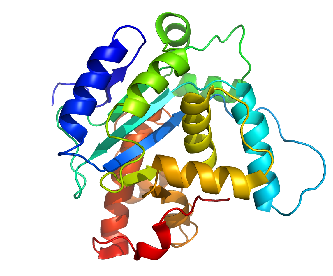 Recombinant Apoptotic Peptidase Activating Factor 1 (APAF1) - Mouse