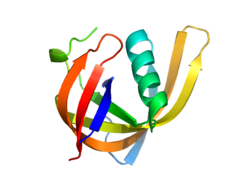 Recombinant Axis Inhibition Protein 2 (AXIN2) - Human