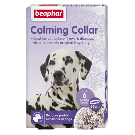 Calming Ól dog