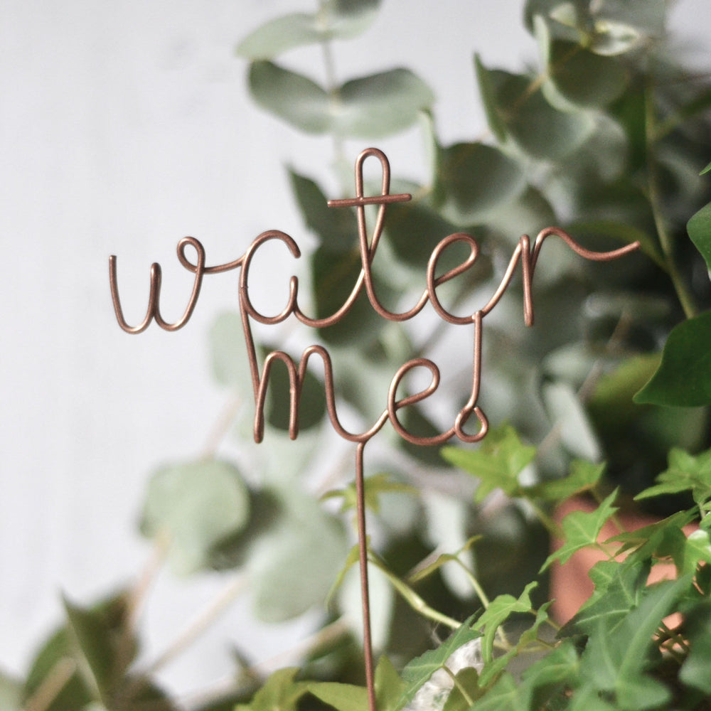 Water me! Plant Topper