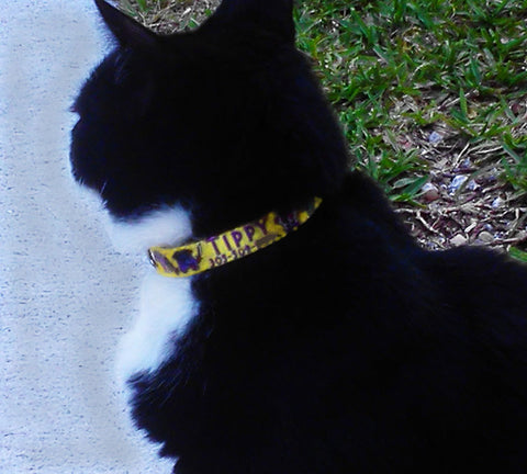 key west personalized cat collar on cat named Tippy