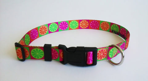 Key West Dog Collar personalized florida citris lime,lemon, orange, grapefruit