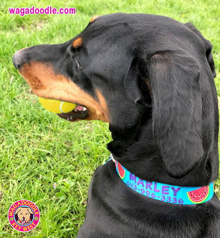 personalized island dog collar handmade in Key West