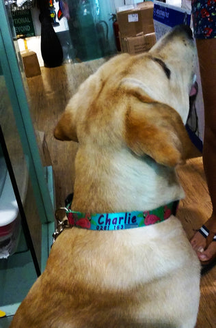 Pink Flamingo dog collar for Charlie from Germany Key West tourists