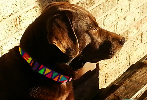 Hershey in his personalized Mayan Weave design Key West