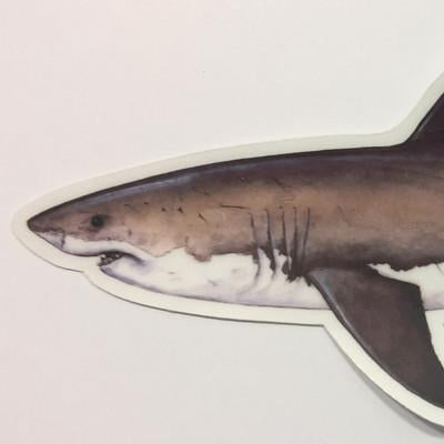 "Great White Shark 8.5"" Stickers from Amadeo - Red Triangle Spearfishing"