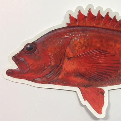 "Vermilion Rockfish 7"" Stickers from Amadeo - Red Triangle Spearfishing"