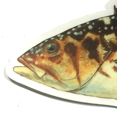 "Calico Bass 7"" Stickers from Amadeo - Red Triangle Spearfishing"