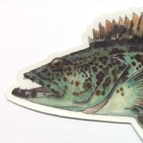"Lingcod 8.5"" Stickers from Amadeo - Red Triangle Spearfishing"