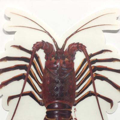 "Spiny Lobster 5"" Stickers from Amadeo - Red Triangle Spearfishing"