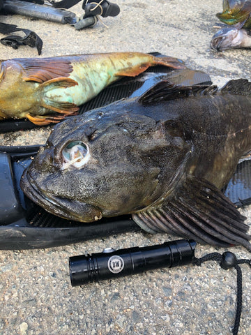 Dark Water V11 1150 Lumen. Flashlight  from Red Triangle Spearfishing - Red Triangle Spearfishing