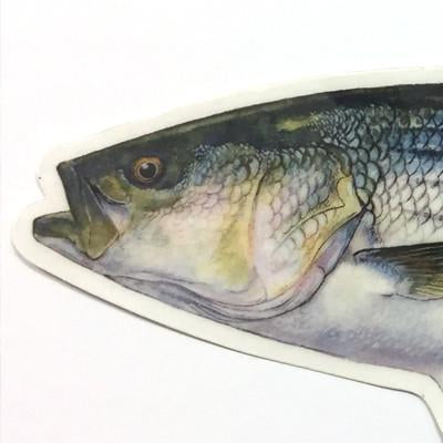 "Striped Bass 8.5"" Stickers from Amadeo - Red Triangle Spearfishing"