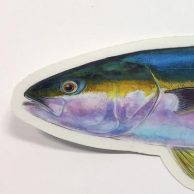 "Yellowtail 8.5"" Stickers from Amadeo - Red Triangle Spearfishing"