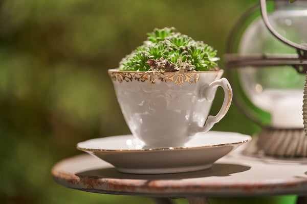 Teacup Planter Workshop - July 16