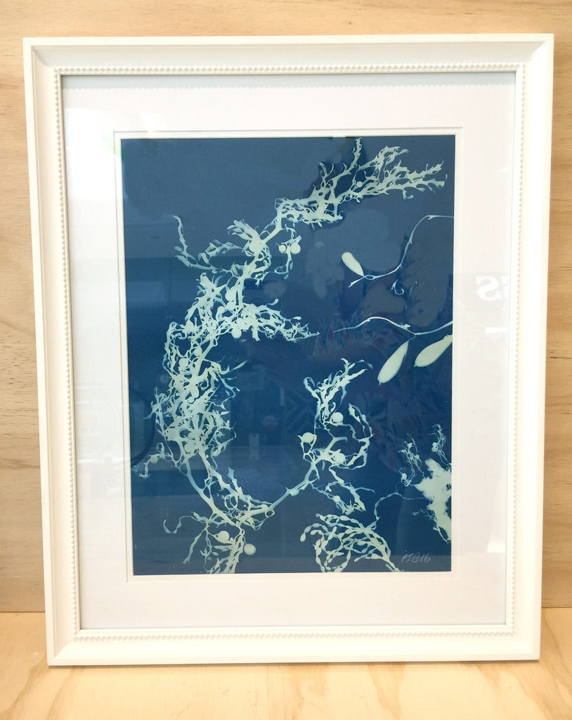 Cyanotype (Framed) by Emma sirona-Macdonald