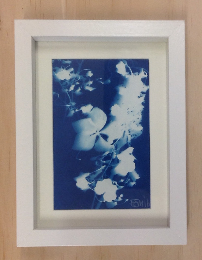 Floral Cyantotype (framed) by Emma Sirona-Macdonald