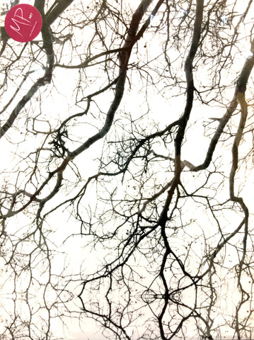 "#Sale #Item ""Mirrored Branches B/W)"" by Milly Pearce (Fine Art Photograph)"