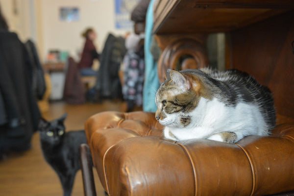 Sophee Smiles at Supernomad - Paris - Cat Cafe
