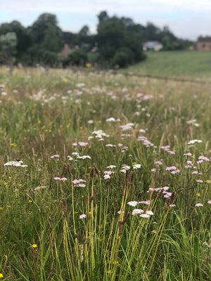 Upwilding Update: our Meadow has Come Alive with Wildlife!