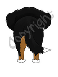 Bernese Mt Dog Butt