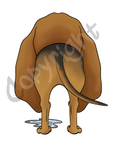 Bloodhound Butt