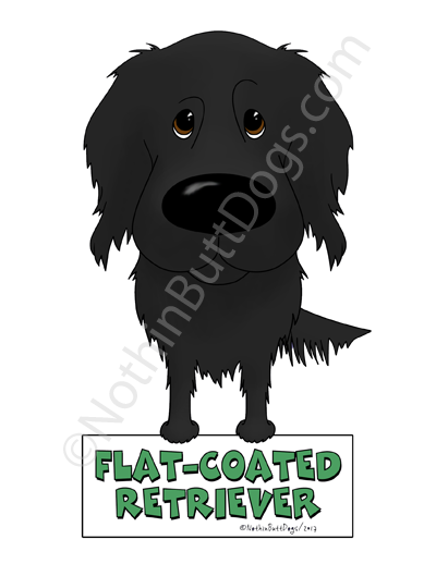 Big Nose Flat-Coated Retriever Magnet