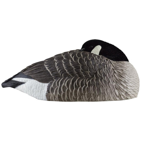 Avian X Canada Sleeper Shells 6 pk.