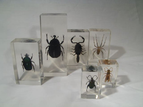Insect Lover's Collection