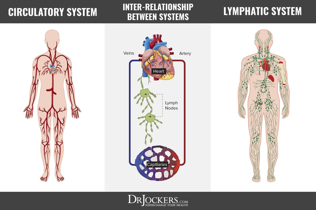 Lymphatic Detoxification Dr Jockers Store