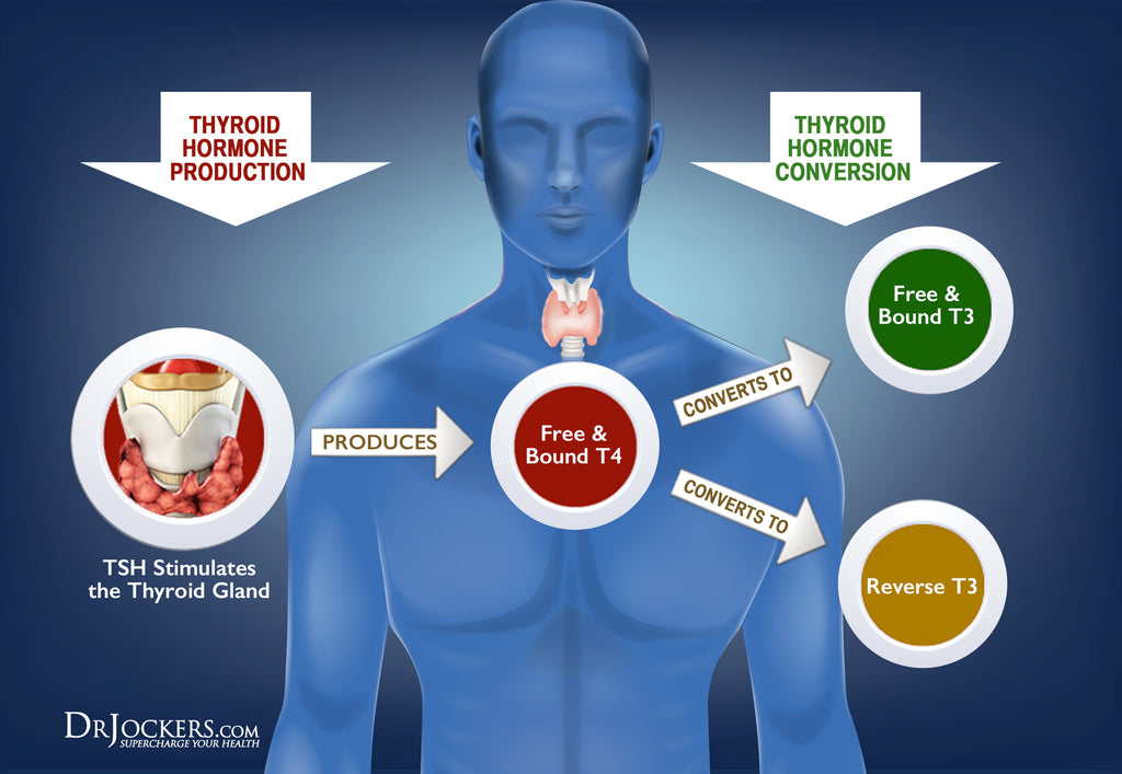 18 Strategies to Beat Hypothyroidism Naturally - DrJockers com
