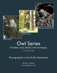 Owl Series boxed cards