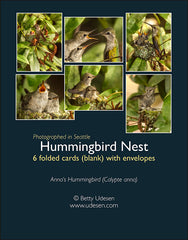 Hummingbird Nest Series boxed cards