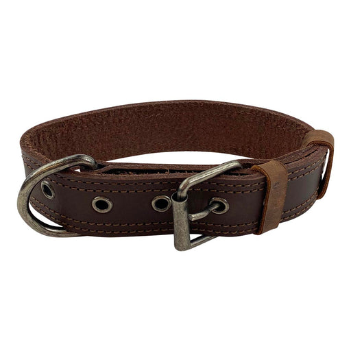 Dog Collar 125 Chewy