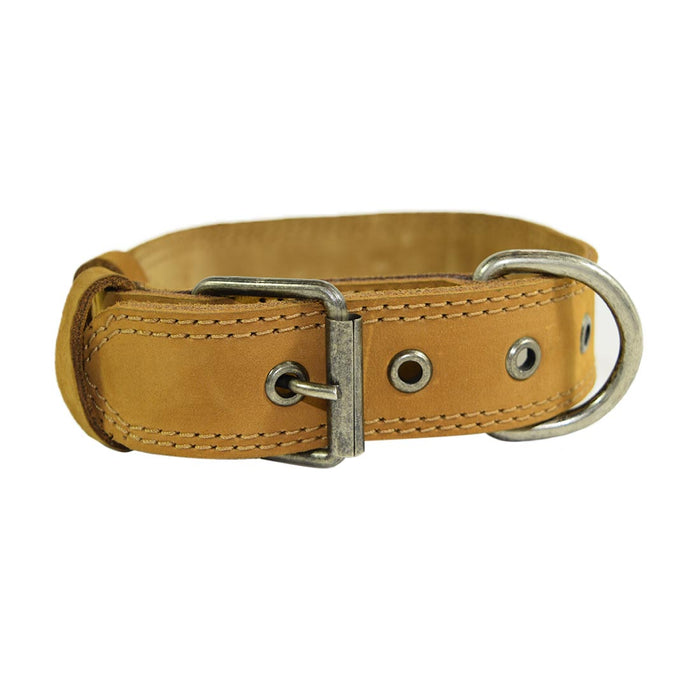 Dog Collar Thick for Small Sized Dogs
