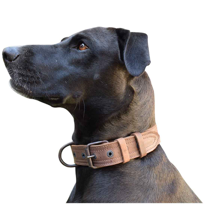 Leather Medium Dog Collar (12 to 21 in.)
