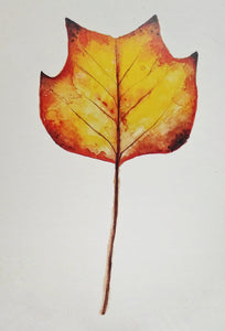 "Autumn Leaf Botanical Art Print 5"" x 7"" - ""Autumn Tulip."""