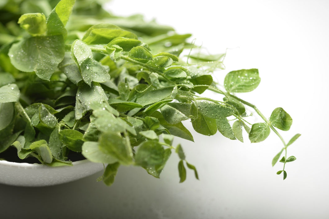 Pea Shoots - 豆苗 (150g) (selection)