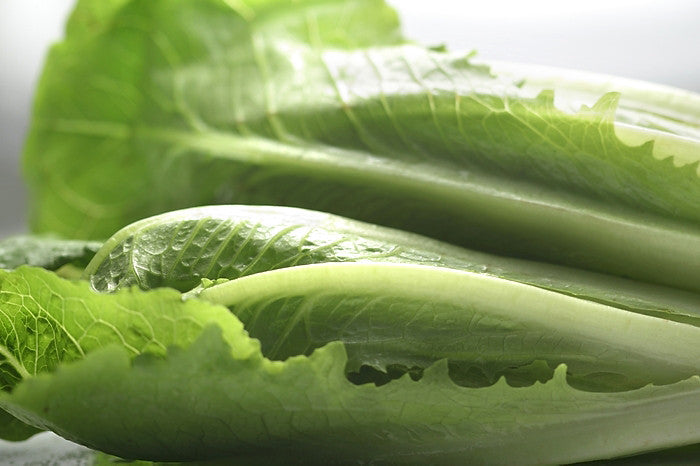 Green Romaine Lettuce - 羅馬生菜 (300g) (selection)