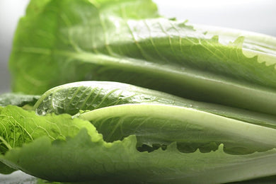 Green Romaine Lettuce - 羅馬生菜 (300g)