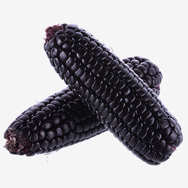 Purple Glutinous Corn - 紫糯米玉米