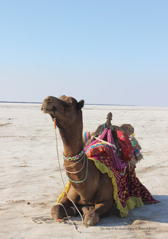 The ship of the desert sitting in Rann of Kutch
